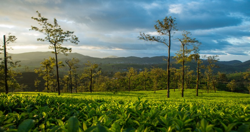 mysore-ooty-coonoor-kodaikanal-tour-from-bangalore2.jpg
