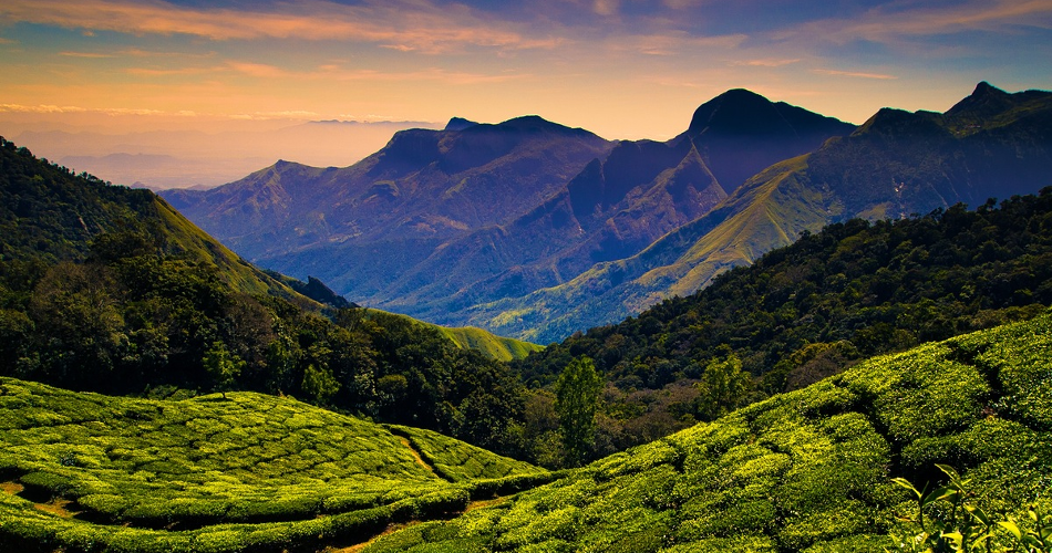 Mysore Ooty Coonoor Tour from Bangalore