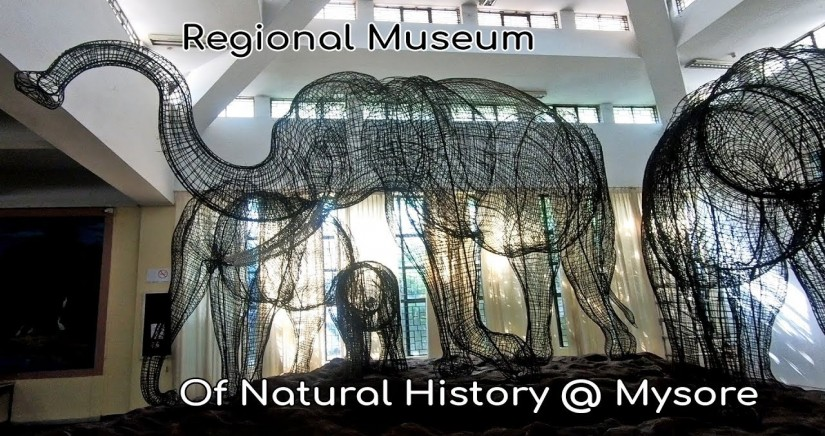 regional-museum-of-natural-history2.jpg