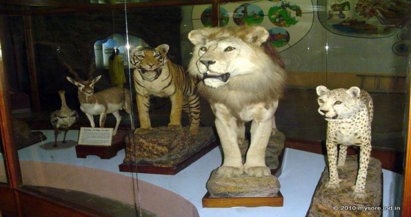 regional-museum-of-natural-history3.jpg